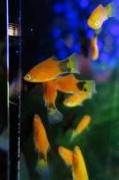 BL170910イオン水族館4IMG_4274