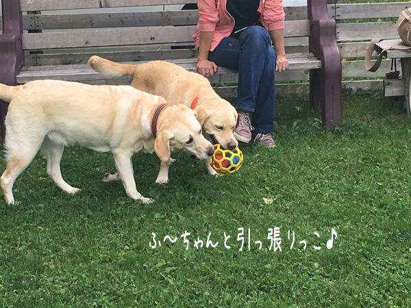 furo_20170912152238ad3.jpg