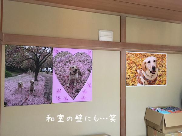 gaku3_20170618230727be2.jpg