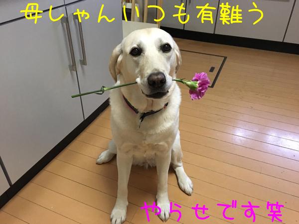 hahanohi_201705172030583b6.jpg
