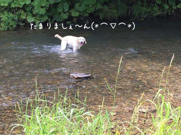 kawa3_20170701212829b2b.jpg