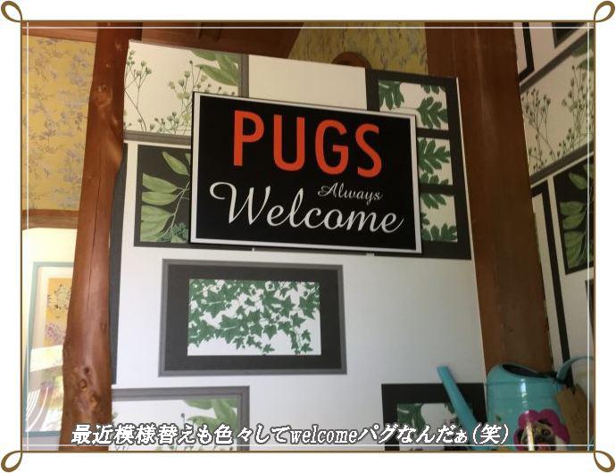 円welcomeぱぐ