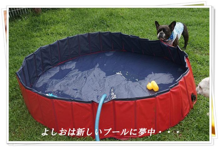 新しいプール