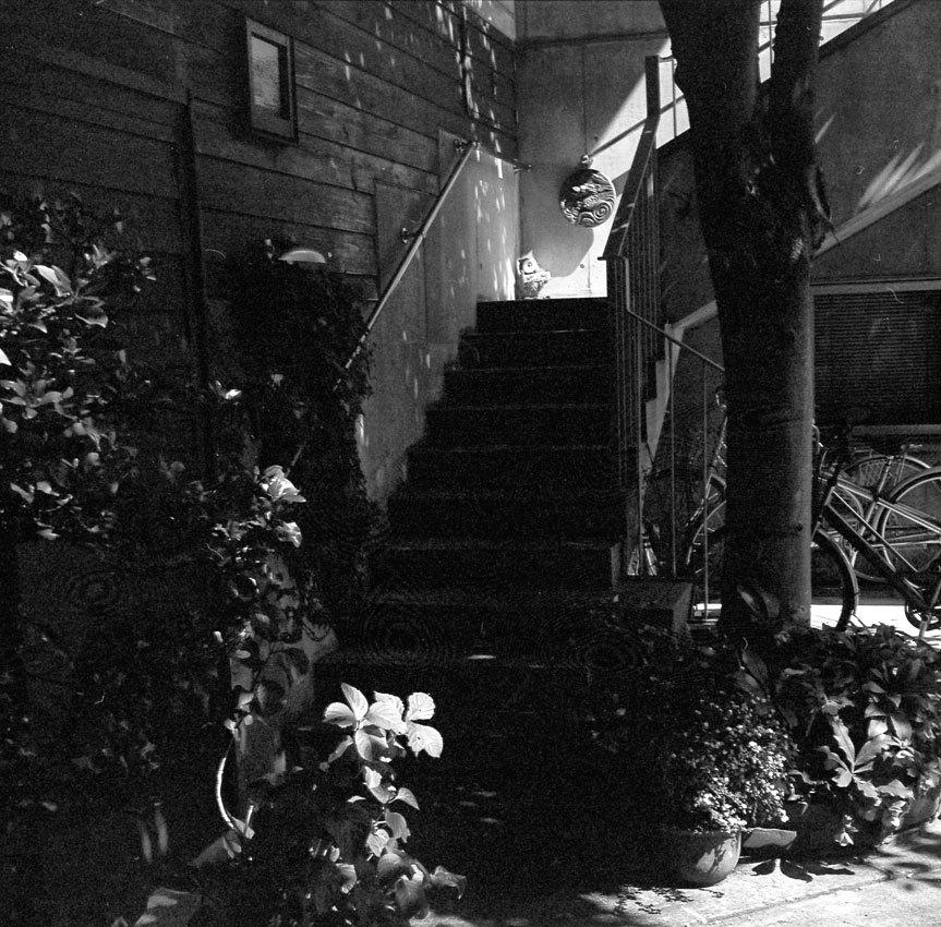 木陰と階段