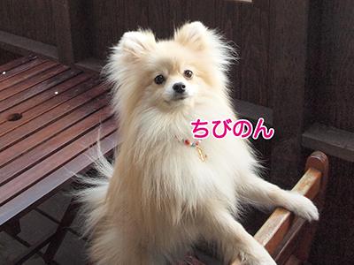 P403339900.jpg