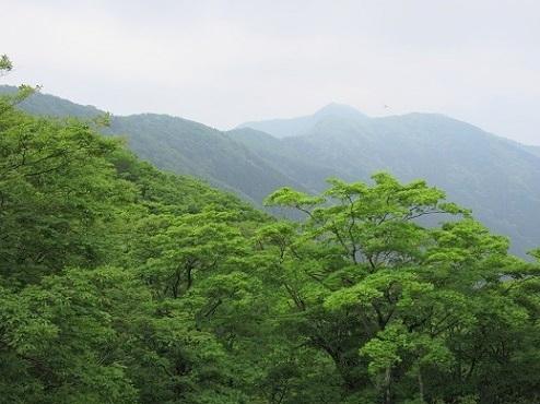 4 稜線に出た 遠くに薊岳