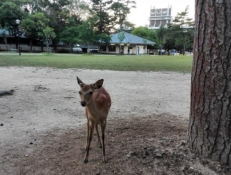 1 奈良公園