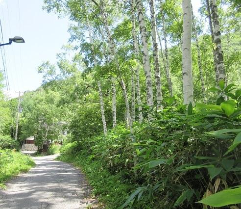 15 白骨温泉・笹屋への道
