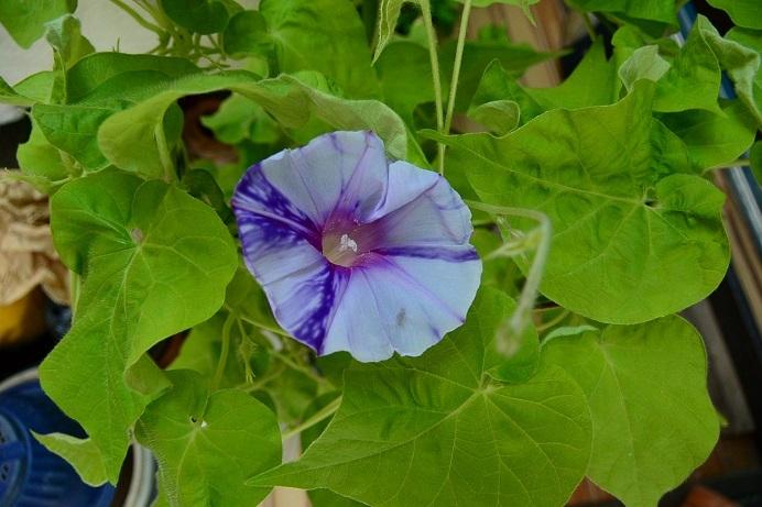 黄葉紫交雑