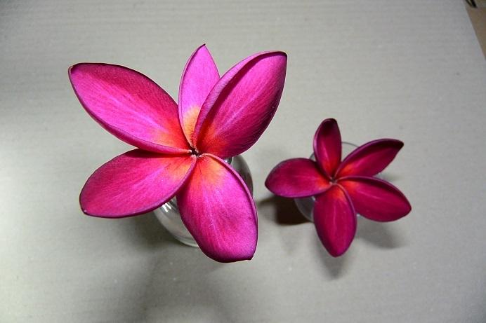 シアムレッド落ちた花