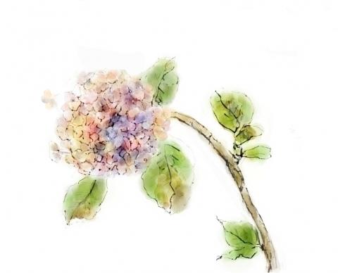 八月の紫陽花_bak