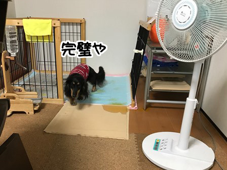 20170625ど-2