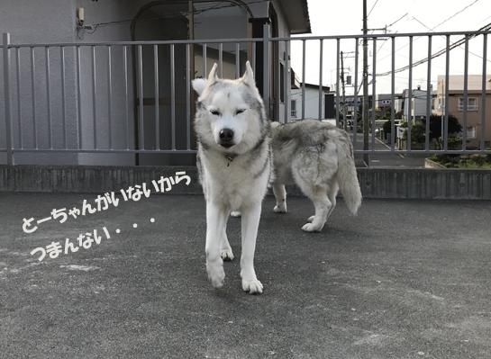 IMG_1328[1]
