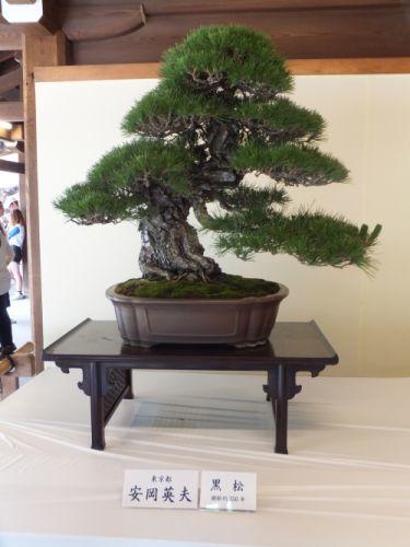 12盆栽1