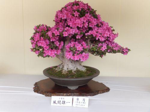 13盆栽2