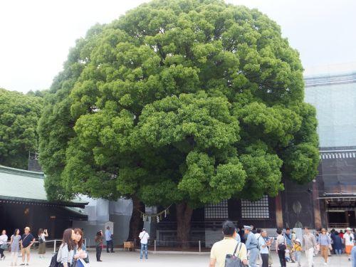 15社殿脇の木