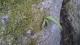 岩から芽①