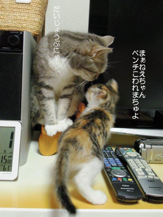 20170601まりん&ハチャ
