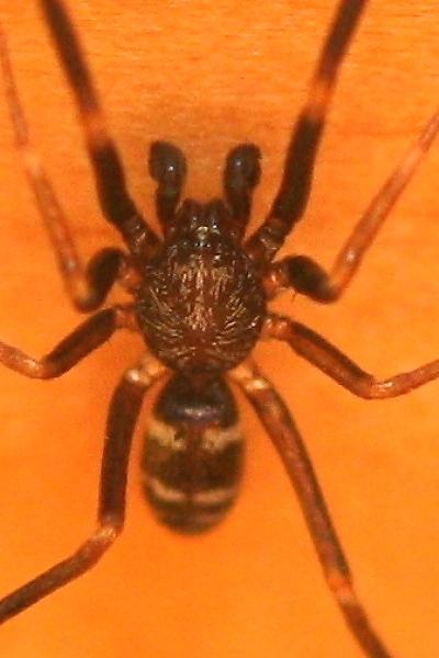 クモの仲間2