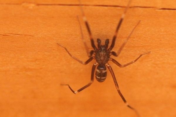クモの仲間3