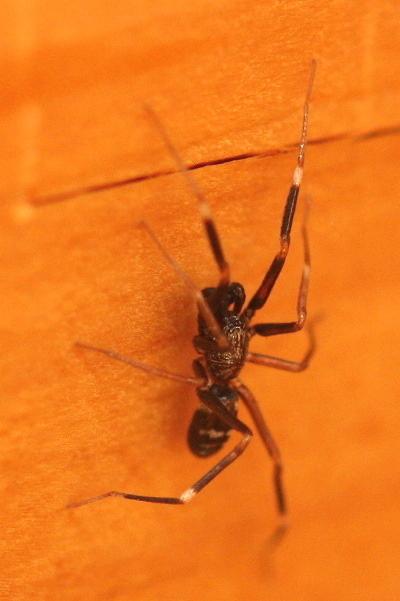 クモの仲間4