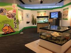 第34回企画展示「干潟の生きもの大集合」