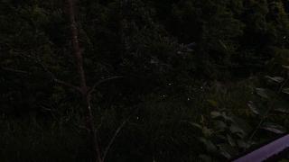 20170527沢地水神さん023J