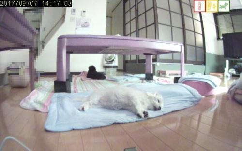 寝てるsuyasuya19530577
