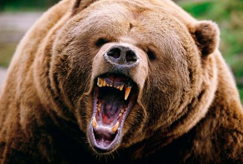 地上最強の獣・クマさん