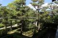 中宮寺の松
