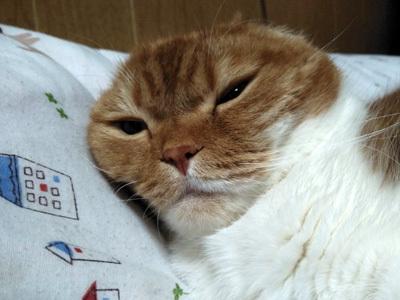 ふくの寝ぼけ顔
