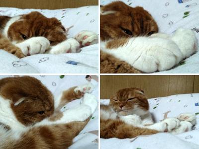 ふくの寝顔 1
