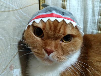 サメふく 1