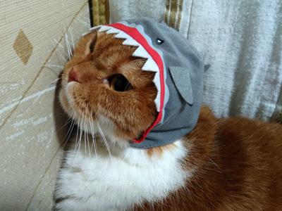 サメふく 3