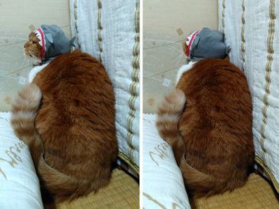 サメふく 4