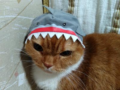 サメふく 5