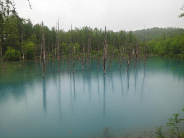 170513青い池_01