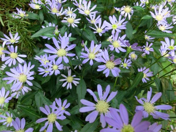 170524 庭の花2