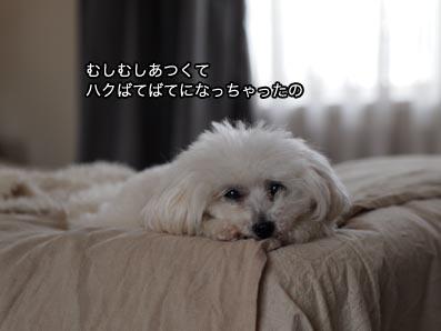 170704_3.jpg