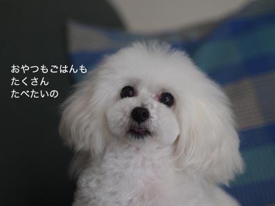 170805_5.jpg
