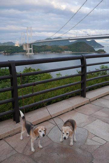 226来島海峡大橋