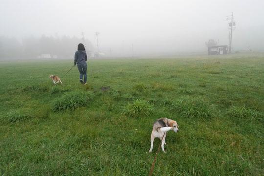 00霧ヶ峰は霧の中