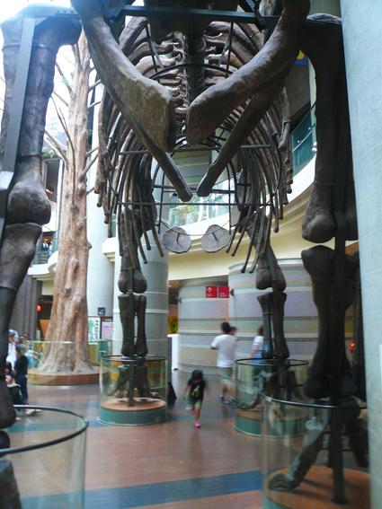 茨城自然博物館2