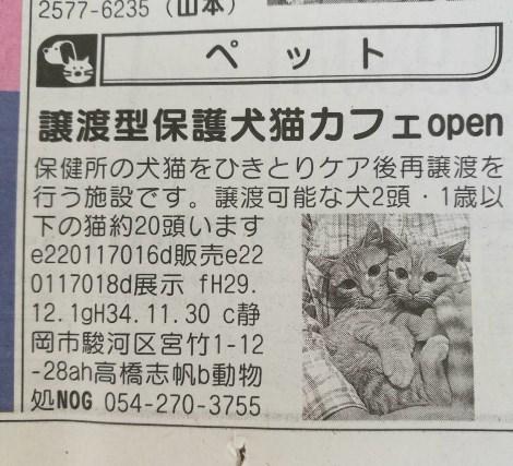 平成29年12月猫カフェ