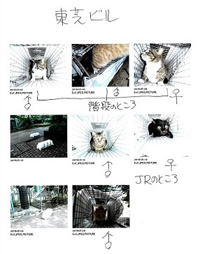 地域猫2img018