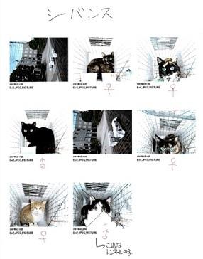 地域猫2img019