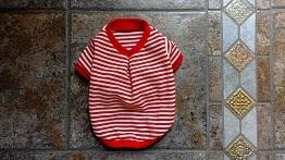 赤ボーダーニットの犬服