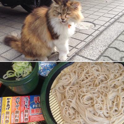 朝猫と朝ソバ