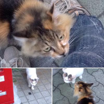 お江戸の猫さん