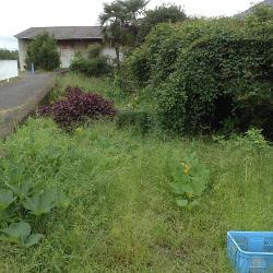 我が家の草原 前